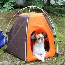 tent for pets